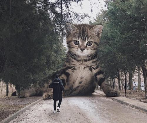 Российский художник Андрей Щербак выложил в интернет множество фотографий гигантских кошек, и они близки к совершенству. Вот одна из них. П