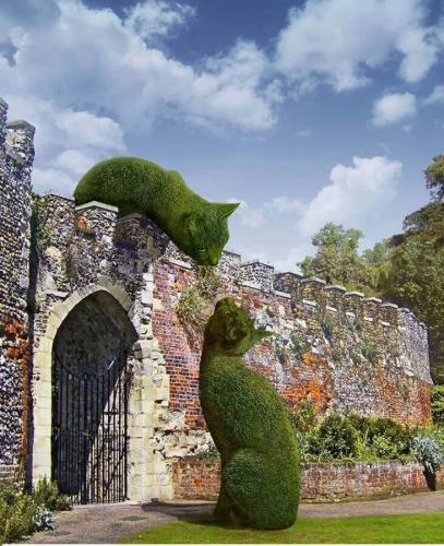 Зеленые кошки