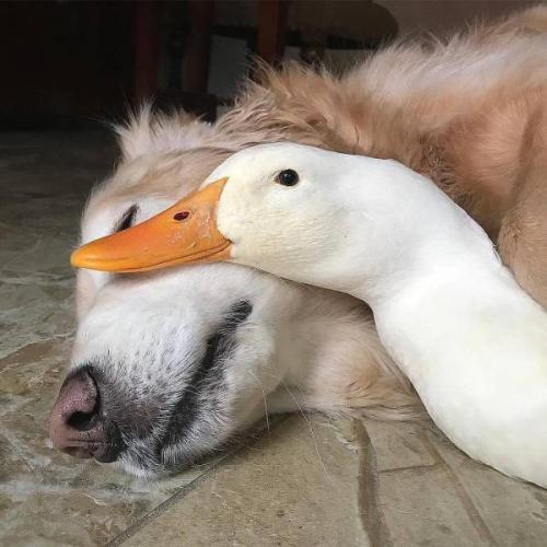 Друзья не разлей вода