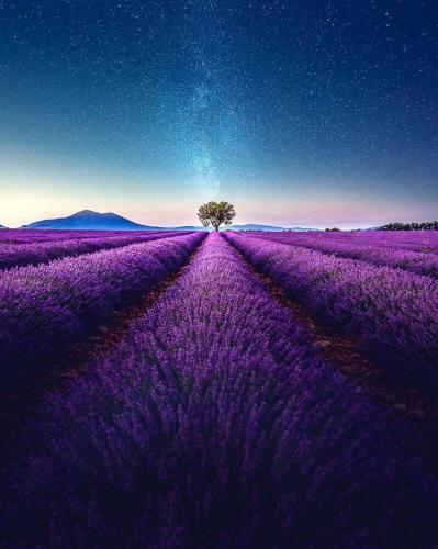 Захватывающее фото лавандового поля на юге Франции